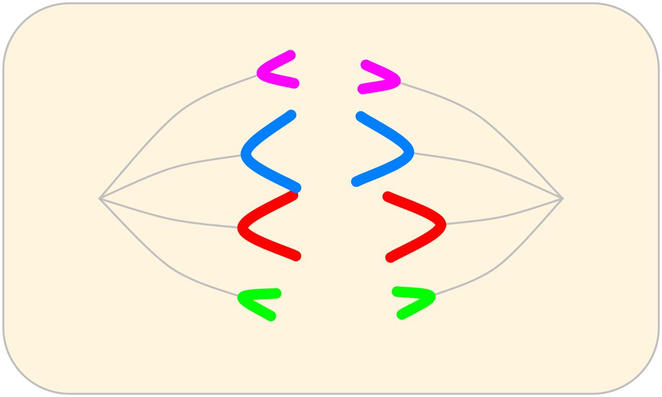 세포분열 모형