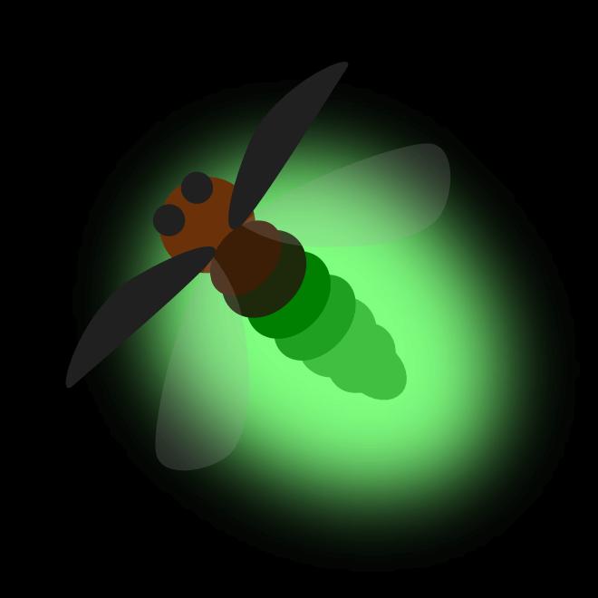 반딧불이의 동조