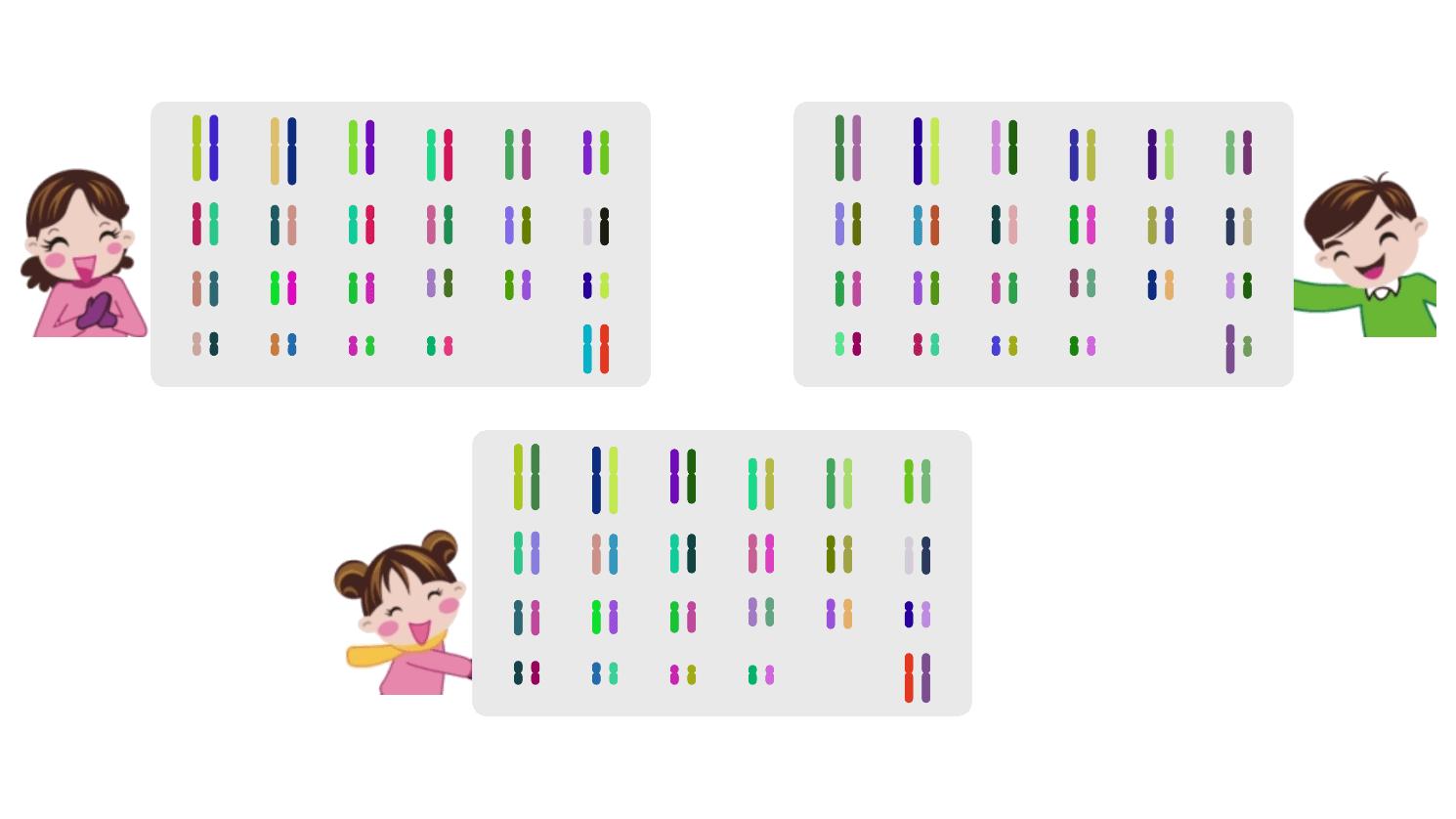 사람의 유전자 전달 Human Gene Transfer