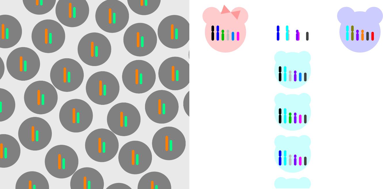 무성생식과 유성생식 Asexual Reproduction and Sexual Reproduction